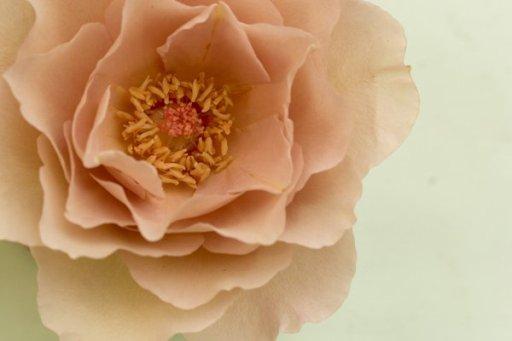 りー の 花 あ ぼん