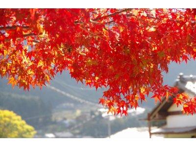 ★ 大原では紅葉が赤く染め上げシーズン真っ盛りです。