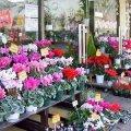 Flower shop 花憐