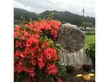 ★ お地蔵様も花いっぱい♪