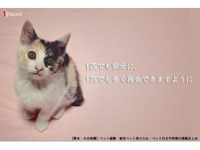 熊本地震被災動物救援募金開始