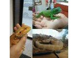 本日のオススメと爬虫類