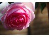 ★ 春は花いっぱい♪