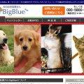 犬のお世話屋さんBigBlue