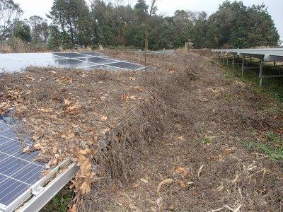 鹿児島県 太陽光発電所の雑草対策