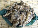 海道厚岸産殻付かきLLサイズ20個