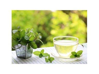 アデプトプログラム 説明 お茶会 (アデプトゼロ)