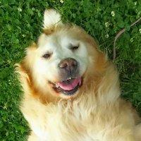 犬の美容室 ジャンピン