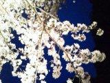 花見で健康にきれいに(^○^)