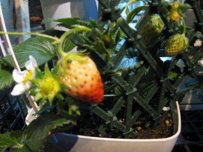 熟れ過ぎた果実をそのままにしちゃダメ!