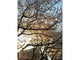 春ですね(#^.^#)