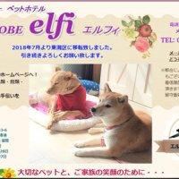 エルフィ elfi