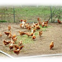 有精卵と不耕起栽培なら曽呂美自然農場