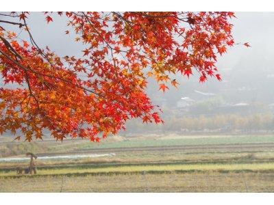 ★ 朝靄にかすむ大原に閉まれる紅葉。♪