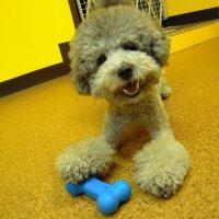 Dog Smile Shop クローバー