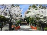 桜満開♪(´∀`*)♪