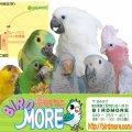 鳥専門店BIRDMORE