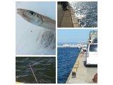 久々の海釣り