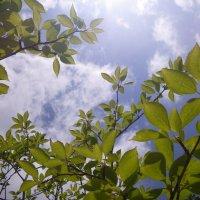 館山市の庭づくり・外構工事・剪定・草刈・伐採のことならスプリングガーデンへ