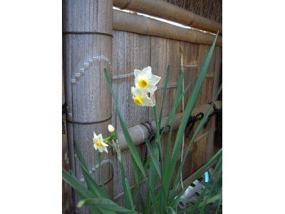 〔第87回〕 Spring will soon come!