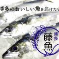 博多 藤魚