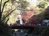 『箕面大滝』 の紅葉!