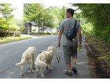 ペットシッター・お散歩代行・ペットホテル・一時預かり・出張トレーニング