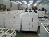 はたはた、金浦港で沖合漁約4,000箱水揚げ