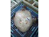 2ヶ月の休漁期間を経て、底引き網漁が始まります。
