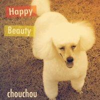 いぬの美容室chouchou-シュシュ-