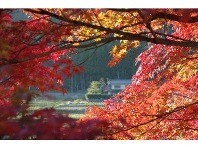 ★ 紅葉も始まり、大原が紅色に染まってきました。