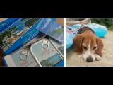 連休満喫☆愛犬ロイドも一緒に!!テレビで何度か紹介されていた(ネットではなかなか手に入らない)缶詰のオイルサーディンもお土産に買ってきました☆