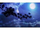 月のリズムで目覚める・・・