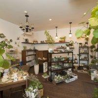 観葉植物と生活雑貨の店 CLASS