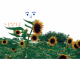 ■どれみふぁ空井♪の空日記21 170815