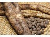 むかごと自然薯
