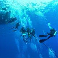 アソシアード ダイビング サービス