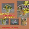 FlowerShop カモミール