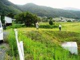 周辺の雑草刈り