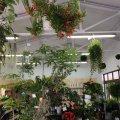 観葉植物専門店 GREEN JAM