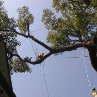 Annの森プロジェクト  ~大きな木の維持管理はお任せ~